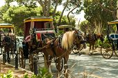 stock photo of carriage horse  - Row of horse with carriages in Mdina - JPG