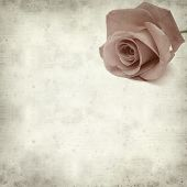 pic of pale  - textured old paper background with pale pink rose - JPG