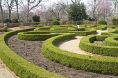 Boxwood Hedges In A Formal Garden