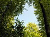 Wood And Sky