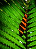 Rainforest leaves