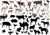 illustration with farm animals collection isolated on white background