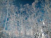 Snow Storm0013