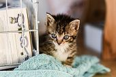 Small Sweet Tabby Kitten.small Sweet Tabby Kitten. poster