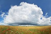 Panorama of wheat and poppy meadow. Nature panorama composition. poster