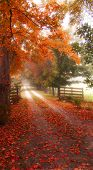 Colorful Misty Autumn Road