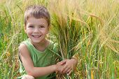Little boy in a wheat field