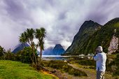 Shallow, overgrown marsh grass coast of the fjord Milford Sound. The gray-haired tourist photographs poster