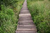 A Path Through Lush Tropical Vegetation Made Of Wooden Planks poster