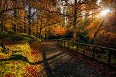Sun Star And Sunbeams Shining Through Branches In Golden Coloured Autumn Trees In Tollymore Forest P poster