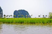 Rice Field Along River