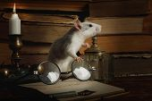 Gray Rat Runs Around Among Old Books, Candle Holder And Old-fashioned Glasses On A Table In An Old H poster