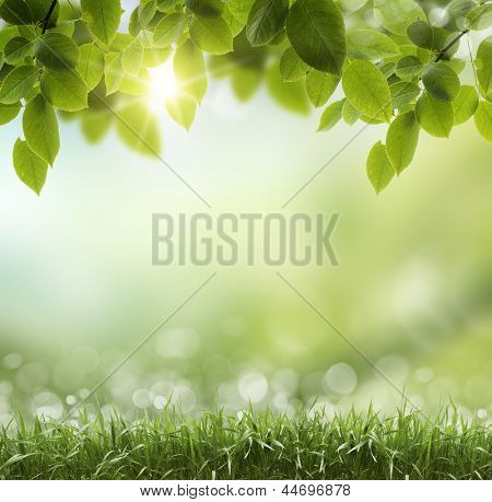 Spring or summer season abstract nature background with grass and blue sky in the back poster