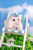 White Hamster Celebrating Birthday