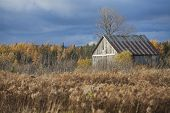 Abandoned cabin in the fields