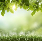 image of greens  - Spring or summer season abstract nature background with grass and blue sky in the back - JPG