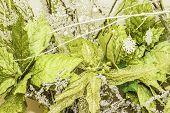 Bright Green Flower Arrangement Background