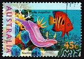 Postage Stamp Australia 1995 Nudibranch