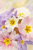 foto of heartwarming  - spring flowers - JPG