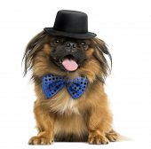 Front view of a Pekingese with a bow tie and top hat, panting, isolated on white
