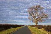 Autumn Ash Tree