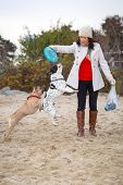stock photo of frisbee  - French bulldogs jumping for a frisbee - JPG
