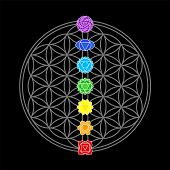 stock photo of plexus  - The seven main chakras - JPG
