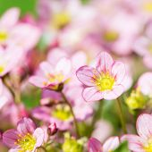 Beautiful spring flowers,floral background