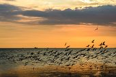 stock photo of flock seagulls  - A Flock of Seagulls in Sky at sunset