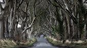 stock photo of ireland  - Woods of Dark Hedges with its strange shape trees - JPG