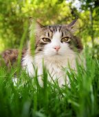 pic of spayed  - a pretty cat sitting in long grass - JPG