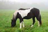 foto of hackney  - Photo of a horse in the fog - JPG