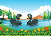 Illustration of a river with two ducks