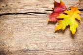 Autumn  leaves over old wooden background with copy space