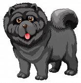 Illustration of a close up dog