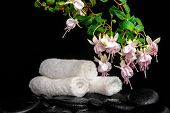 Spa Concept Of Branch Pink Fuchsia Flower, Towels And Zen Basalt Stones With Drops In Water,