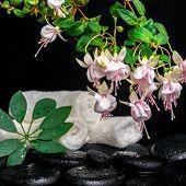 Spa Setting Of Branch Pink Fuchsia Flower, Towels, Leaf Shefler And Zen Basalt Stones With Dew, `fra