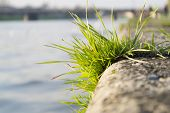 Grass on stone embankment