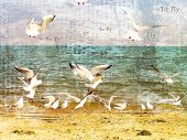 Vuelo de gaviotas sobre el mar.