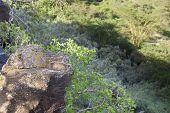 Hyraxes At Lake Nakuru, Kenya