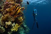 stock photo of bottomless  - Underwater shot of the lady free diver ascending along the vivid coral reefs - JPG