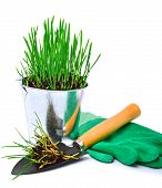 Shovel, Rubber Gloves And Steel Pot With Green Grass