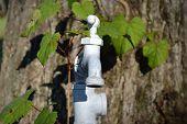 white faucet close up