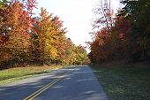 Road in the forest in autumn with orange leaves