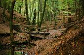 Season Forest Path