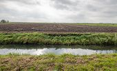 Typical Dutch Flat Polder Landscape In Autumn