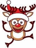 foto of bulging belly  - Funny brown reindeer with big antlers - JPG