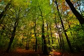 Beautiful Forest With Sunlights And Path In Autumn