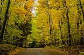 foto of canopy  - a dirt road rises under a canopy of autumn leaves at a campsite in potawatomi state park wisconsin - JPG