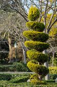 image of tree trim  - Tall elegantly trimmed tree in a park - JPG